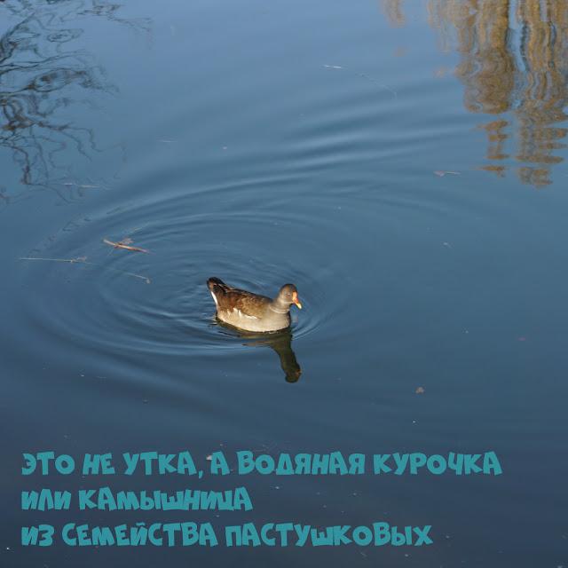 Камышница, Симферополь, Гагаринский парк