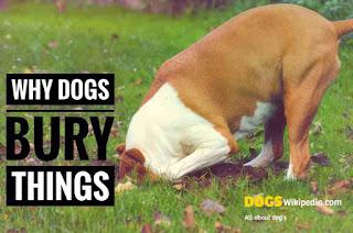 Dog Bury things, dog hide bones, dog hide snipers