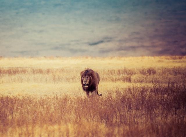 20 Fakta Menarik Mengenai Singa Versi Watpedia
