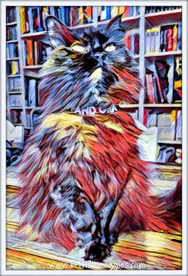 siberian cat in a library, jazzy art, cat art, library