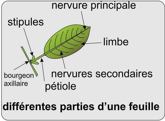 Cours de Biologie Végétale pour SVT S2 - Ch5