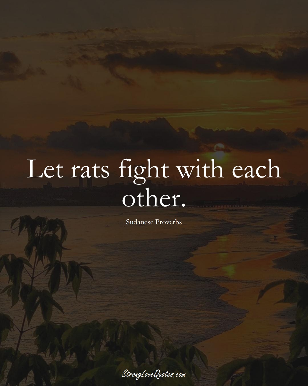 Let rats fight with each other. (Sudanese Sayings);  #AfricanSayings
