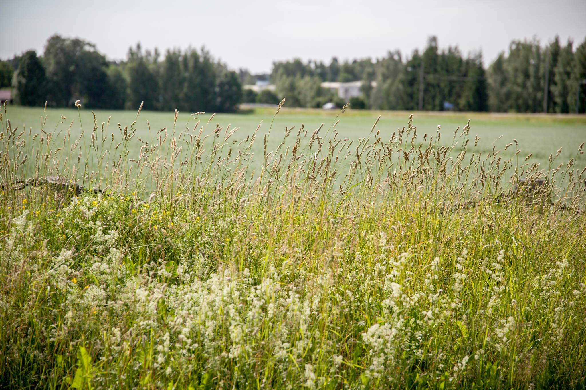 pelto pälkäne heinää