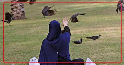 صدق أو لا تصدق.. طيور تخطف الأساور الذهبية!!