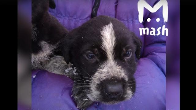 Мужчина выкинул щенка на помойку в отместку жене, с которой поссорился 8 марта. От смерти собаку спасли волонтеры из приюта