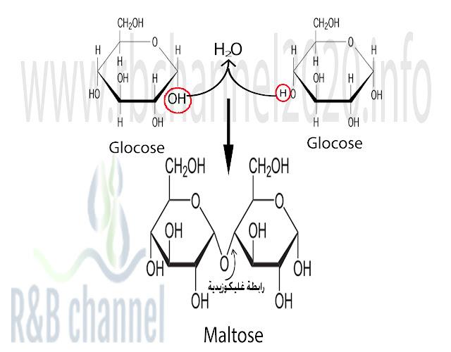 تشكل الغليكوزيدات في السكريات الاحادية