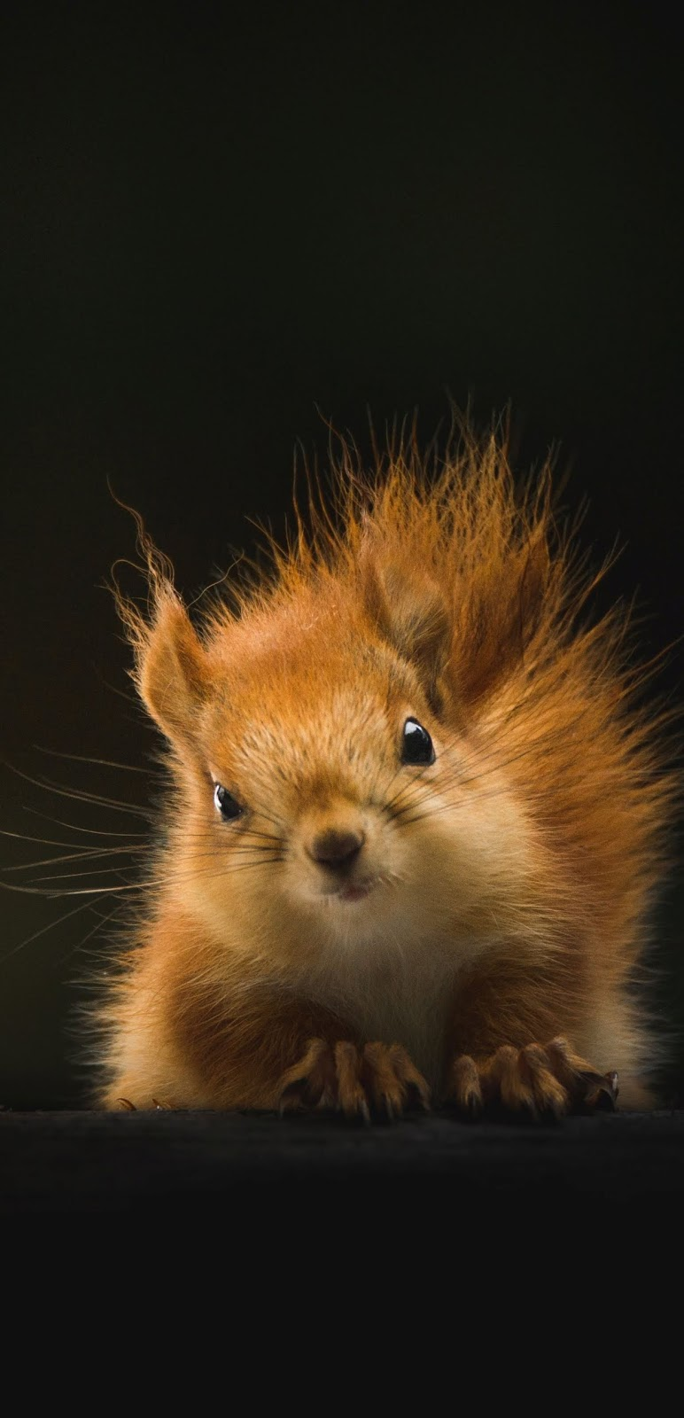 A cute squirrel.