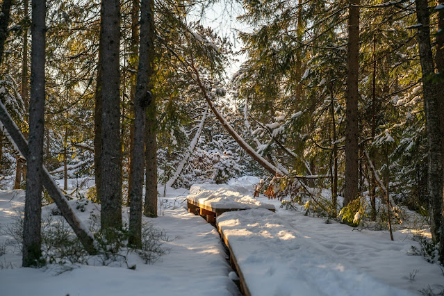 Rundweg Kreuzotter | Hochmoor Filzwald / Kloster Filz | Nationalpark Bayerischer Wald 13
