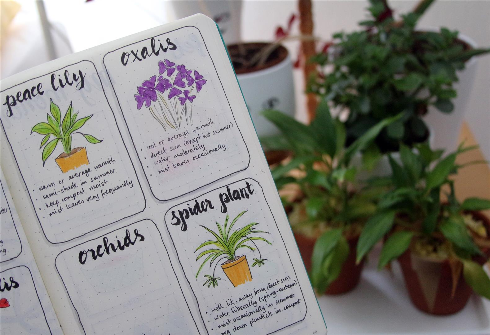 Emuse bullet journal ideas plant care bullet journal ideas plant care izmirmasajfo