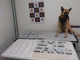 Canil da Guarda Municipal deJundiaí apreende mais de 1,6 mil porções de drogas