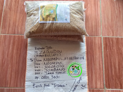 Benih pesana   M. ZAINUDIN Jombang, Jatim  (Sebelum Packing)