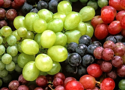 grapes poisonous toxicity dog
