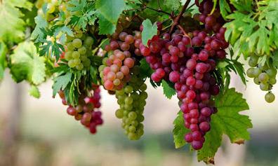 अंगूर के लाभ