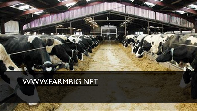 The establishment of a new dairy herd farmers can opt to acquire quality animals through Embryo transfer technology, heifers, and in-calf heifers.