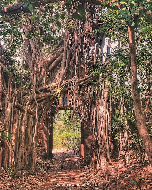 Ancient Gates and Banyan trees of Ranthambore