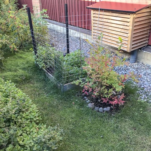 odlingsbox, radonsug, blåbär
