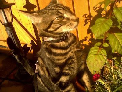 tabby kitten and flower
