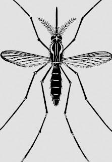 Tutotial Perbaikan Raket Nyamuk di Rumah dengan Mudah