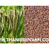 TAMIL HEALTH TIPS - What are the benefits of ragi?
