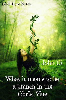 Our role as branches in the Christ Vine - John 15