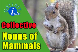 Collection of Collective Nouns