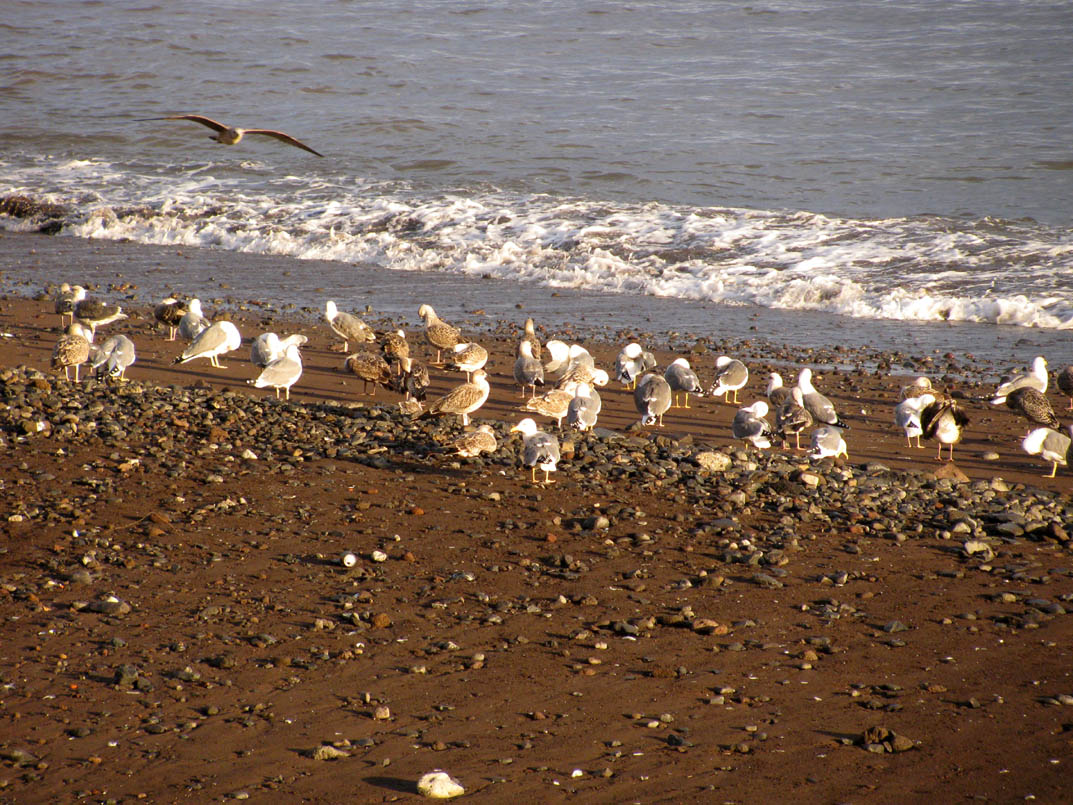seagulls in a meeting