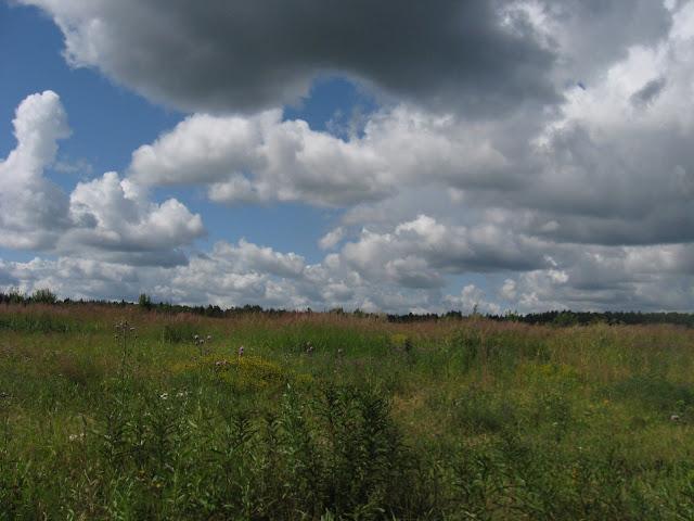 Облака и разнотравье