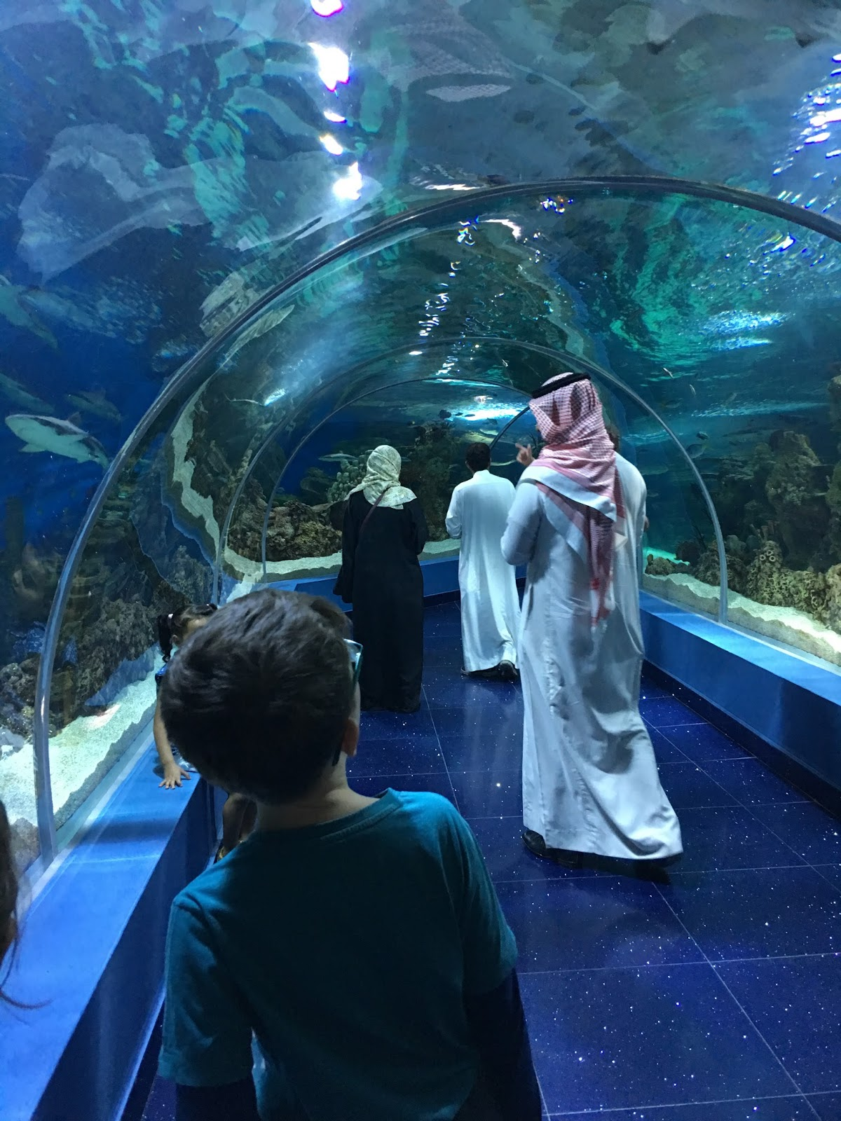 Fish aquarium jeddah - All The Favourites Are There Sharks Mostly Black Tips Turtles Parrot Fish Clown Fish Eels Seahorses And Jellyfish Fakieh Aquarium Jeddah