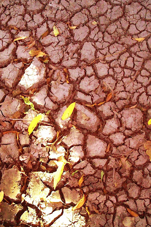 ambiente de leitura carlos romero cronica conto poesia narrativa pauta cultural literatura paraibana sertao nordeste seca luar catole do rocha