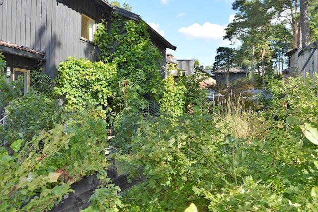 Se en hage i harmoni med seg selv - Bærbusker og annet mot huset. Furulunden