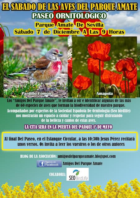 Paseo Ornitológico Parque Amate, Sábado 7 de Diciembre 2019.