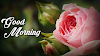 Good Morning Quotes With Roses