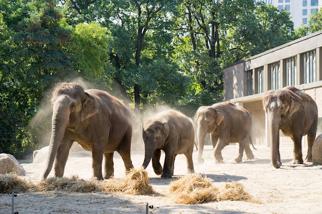 ベルリン動物園
