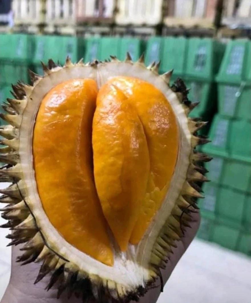 Buah Lai buah lay buah kalimantan durian lai durian lay Jawa Timur