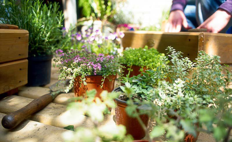 How to Plant a Beautiful Perennial Garden