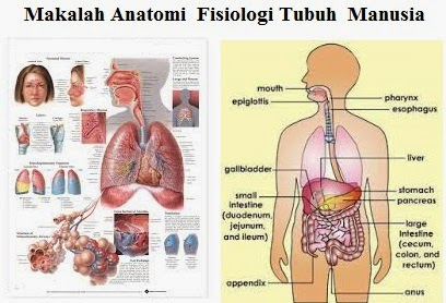 Makalah Anatomi Fisiologi Tubuh Manusia Cinta Ilmu Kesehatan