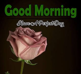 New Good Morning 4k Full HD Images Download For Daily%2B84