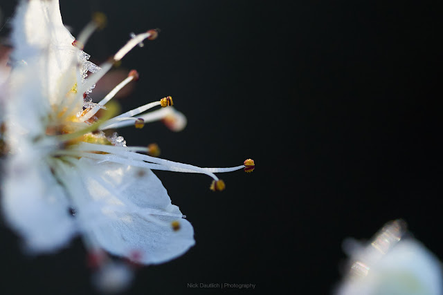 Close-up of spring blossom in morning light