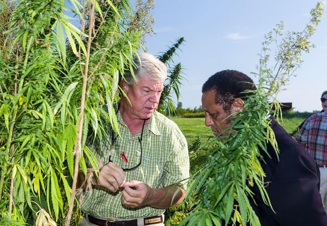 hemp farming guide cannabis farm harvest marijuana crop grower profit