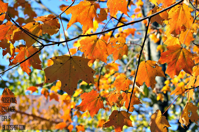 Photo of fall leaves in yellow and orange by the rosevinecottagegirls.com