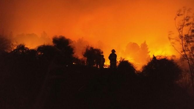koide9enisrael enorme incendie de for t cette nuit pr s. Black Bedroom Furniture Sets. Home Design Ideas