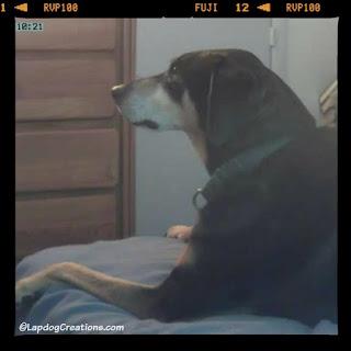 happy hound dog