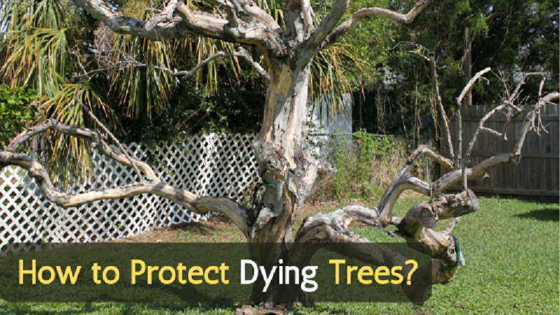 How to Protect Dying Trees in Your Landscape?