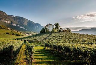 strade del vino, dell'olio e dei sapori