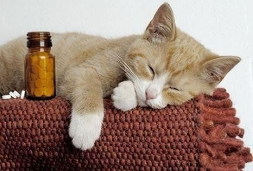 remedio