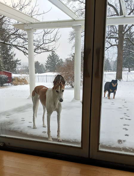 image of the dogs standing at the back door in the snow, waiting to come inside