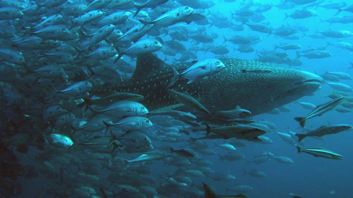 denizaltı manzara resimleri