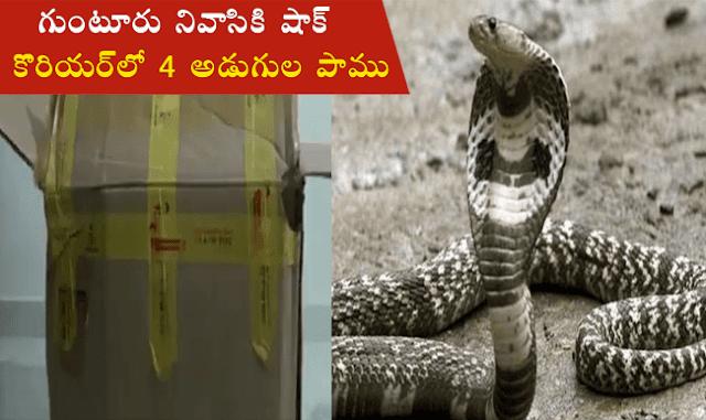 Courier-deliveres-snake-in-parcel-to-Guntur-man-in-Odisha