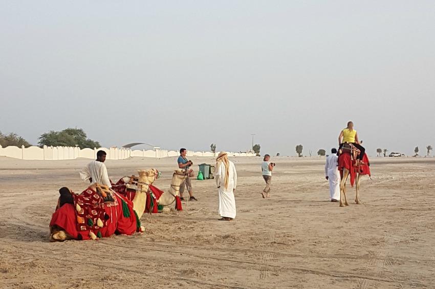 Qatar Desert Sand Dunes Camels