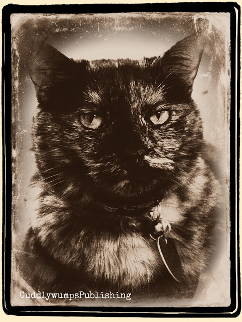 Paisley (tortoiseshell cat) in daguerreotype-style photo.